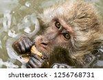 Monkey Eating Peanut