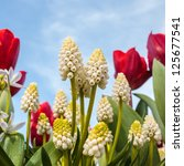White Grape Hyacinths With...