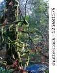 moss covered rainforest | Shutterstock . vector #125681579