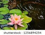 pink lotus flower | Shutterstock . vector #1256894254