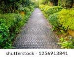 cobble stone walkway in a...   Shutterstock . vector #1256913841