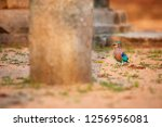 colorful  bright blue green... | Shutterstock . vector #1256956081