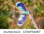 colorful  bright blue green... | Shutterstock . vector #1256956087