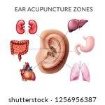 vector realistic illustration... | Shutterstock .eps vector #1256956387