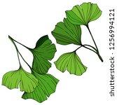 vector isolated ginkgo... | Shutterstock .eps vector #1256994121