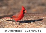 Bright Red Northern Cardinal...