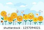 Panoramic Of Sunflower Field...
