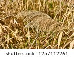 selective focus close up  of a... | Shutterstock . vector #1257112261