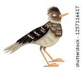 Lark Bird  A Brown Motley...