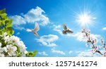 pigeons flying among the... | Shutterstock . vector #1257141274