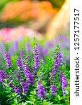 flowers in nature. | Shutterstock . vector #1257177517