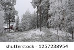 snowy forest woods   cold and... | Shutterstock . vector #1257238954