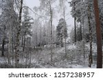 snowy forest woods   cold and... | Shutterstock . vector #1257238957