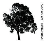 silhouette tree isolated on a... | Shutterstock . vector #1257252097