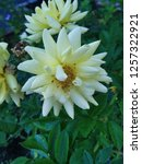 Small photo of crenate orchid white cactus representing the diversity of colors