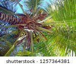 looking up the knobby brown... | Shutterstock . vector #1257364381