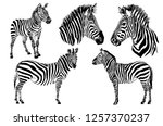 Graphical Set Of Zebras ...