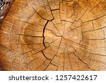 close up with a wide angle lens ... | Shutterstock . vector #1257422617