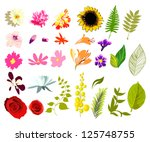 collection of flowers and... | Shutterstock .eps vector #125748755