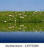 Meadow Grass And Flowers With...
