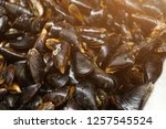 close up heap of raw fresh... | Shutterstock . vector #1257545524