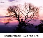 Silhouette Of Lonely Tree In ...