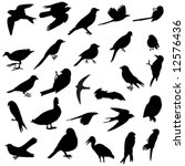 several silhouettes of several birds races - stock vector