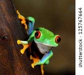 Red Eye Frog  Agalychnis...