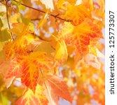 leaves in sunlight   Shutterstock . vector #125773307