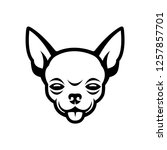 chihuahua face   isolated... | Shutterstock .eps vector #1257857701