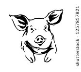 hand brush sketch of a pig.... | Shutterstock .eps vector #1257857821