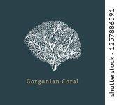 gorgonian coral vector... | Shutterstock .eps vector #1257886591