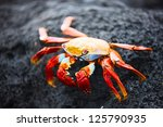 Sally Lightfoot Crab On A Blac...