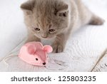 Stock photo kitten and pink mouse 125803235