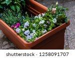 a big plastic planter full of... | Shutterstock . vector #1258091707