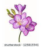 Stock photo flowers isolated on white background 125815541