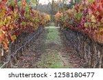 fall foliage  autumn landscape... | Shutterstock . vector #1258180477