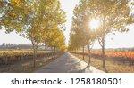 fall foliage  autumn landscape... | Shutterstock . vector #1258180501