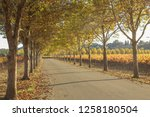fall foliage  autumn landscape... | Shutterstock . vector #1258180504