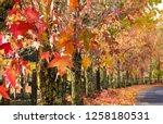 fall foliage  autumn landscape... | Shutterstock . vector #1258180531