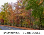fall foliage  autumn landscape... | Shutterstock . vector #1258180561