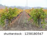 fall foliage  autumn landscape... | Shutterstock . vector #1258180567