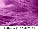 purple chicken feathers in soft ... | Shutterstock . vector #1258291114