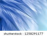 blue chicken feathers in soft... | Shutterstock . vector #1258291177