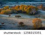 autumn grazing scenery on... | Shutterstock . vector #1258315351