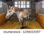 bashang of inner mongolia horse ... | Shutterstock . vector #1258315357