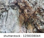 cave wall stone background... | Shutterstock . vector #1258338064