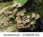 mushrooms in the forest | Shutterstock . vector #1258339141