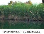 nile river near aswan  egypt   Shutterstock . vector #1258350661