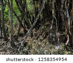 forest fire aftermath | Shutterstock . vector #1258354954